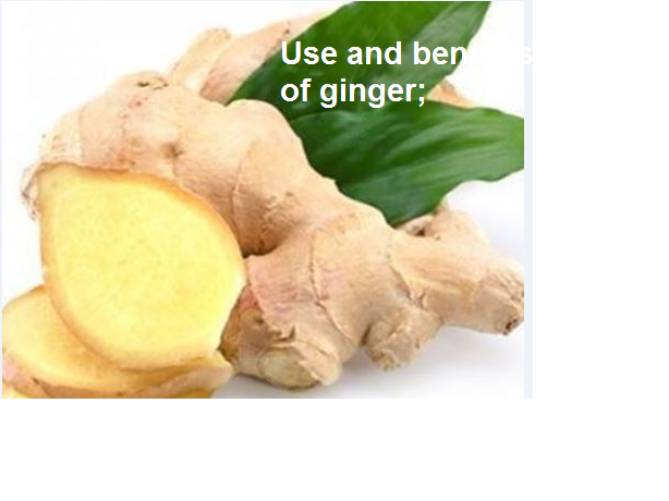 benefits and use of ginger